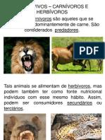 Carnívoros e herbívoros 4ª série