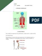 cavidadescorporales-120721101541-phpapp01