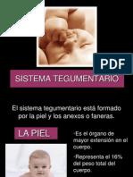 2 sistemategumentario.ppt