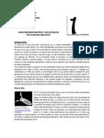 LABORATORIO 1. Caracterización fenotípica y ciclo de vida DE Drosophila melanogaster