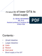 Anatomy of Lower GIT-OK