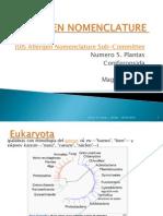 Allergen Nomenclature Plantas Coniferopsida