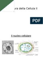 Bc2b-Strutt Cell Iiiweb