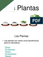 Las Plantas de Jesus