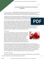 Produccion de fresas orgánicas (Fragaria x ananasa) de invernadero en Xochimilco - Revista Vinculando