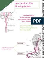 Vías de conducción corticoespinales
