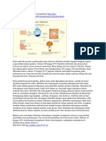 metabolisme biirubin