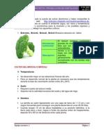 Producto 2 Procesador de textos.pdf
