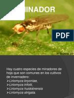 Presentacion  minador.pptx