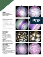 Láminas de histologia (características y funciones)