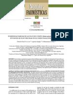 NUMEROSAS PAREJAS DE AGUILUCHO COMÚN (Buteo polyosoma) NIDIFICANDO EN POSTES DE ELECTRICIDAD EN EL NORTE PATAGÓNICO, ARGENTINA