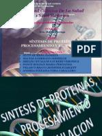 Sintesis de Proteinas o Traducción