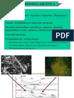 Microbiologia+Algas