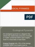 3. Ecological Pyramids
