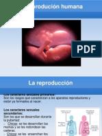 La_reprodución_humana