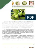 Diagnóstico de necesidades de infraestructura para impulsar la export. de guayaba