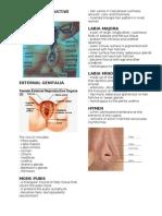 Female Reproductive Anatomyd