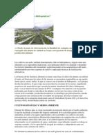Qué son los cultivos hidropónicos.pdf