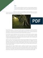 El Árbol de la Autoestima.docx
