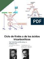 Clase Ciclo Krebs