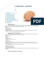 Anatomia Creierului