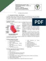 Roteiro de Anatomia do Coração - Parte Interna