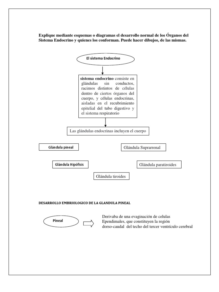 Único Diagrama De Los órganos De Su Cuerpo Adorno - Imágenes de ...