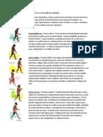 ETAPAS DE LA EVOLUCIÓN DEL HOMBRE