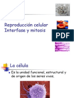 interfase y mitosis.ppt