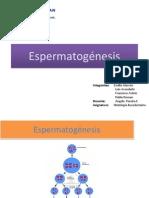 espermatogenesis (1)