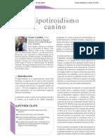 Revista Veterinary Focus Patologias Endocrinas