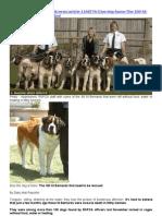 RSPCA & the 101 St. Bernard Dogs