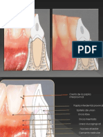 Anatomia Periodonto Normal