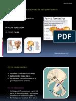 Anatomia Pelvica Desde Un Punto de Vista Obstetrico