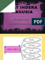 Slide Show Alat Indera Manusia