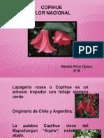 Presentación Copihue.pptx