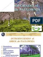 Arbol de Paulownia Matthew Brewer (1)