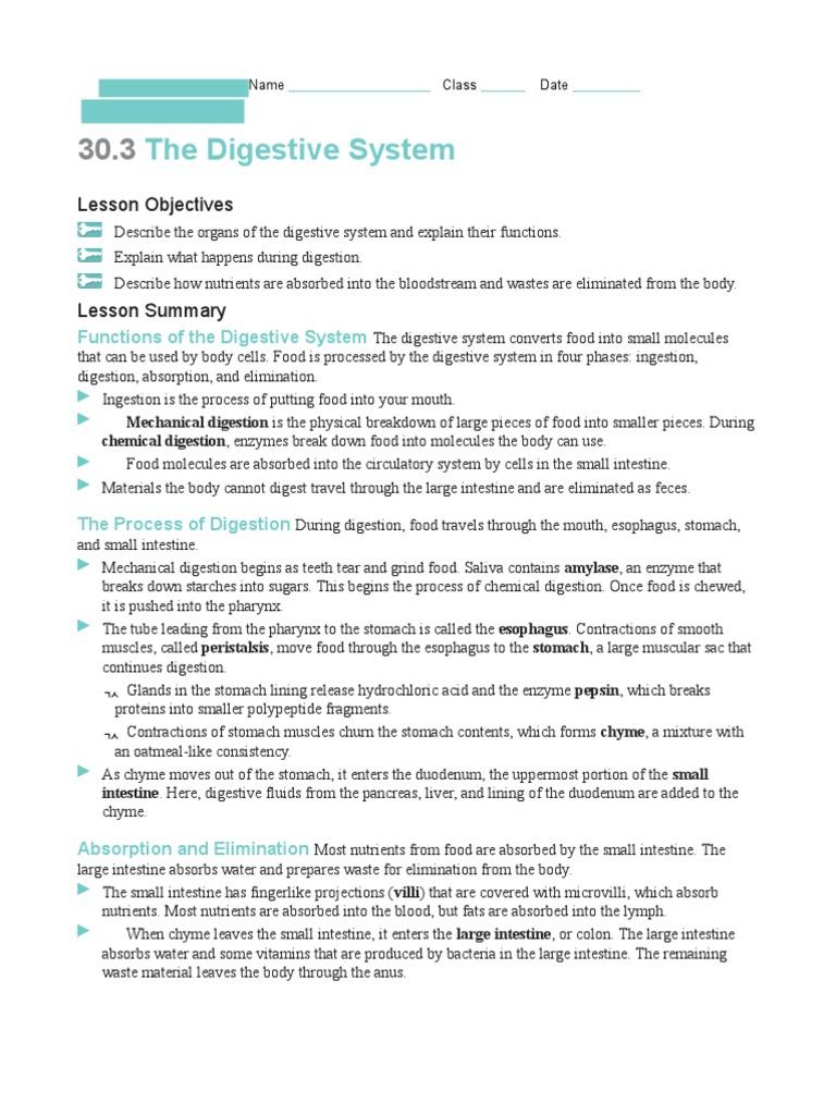 Digestive System Worksheet (1) | Digestion | Human Digestive System