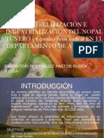 3.1. Comercializacion del Nopal_Yulisa.pptx