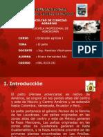 3.2. El cultivo de Palto.pptx