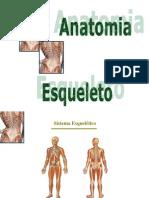 Anatomia Humana Esqueleto