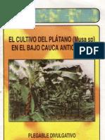 El Cult Ivo Del Plata No