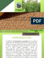 4.2. Cultivo de Kiwicha.pptx