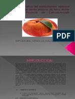 5.2. Cultivo de Melocoton.pptx