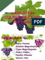 6.1. Manejo del cultivo de vid.pptx