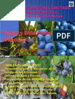 6.2 . Plagas y enfermedades del arandanp.pptx