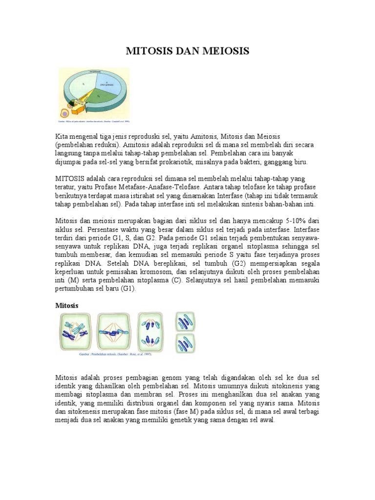 Mitosis dan meiosisc ccuart Gallery