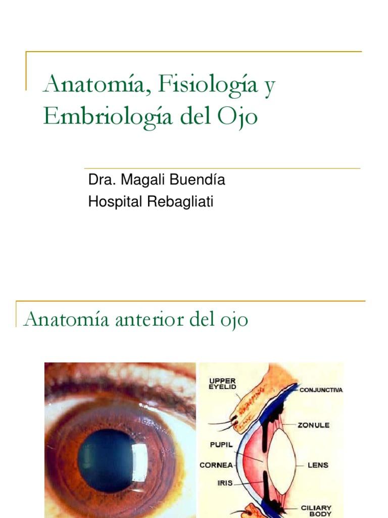 1. Anatomía, Fisiología y Embriología del Ojo