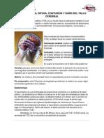 Lesion Axonal Difusa, Contusion y Lesion Del Tallo Encefalico