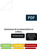 metamorfosis embriology